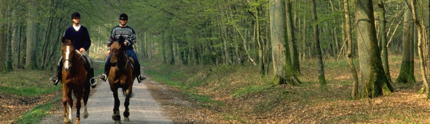 1 Forêt d'Hesdin diapo